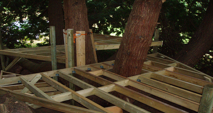 Mid construction of multi tiered platform inside conifer canopy. Seal Chart, Sevenoaks, Kent